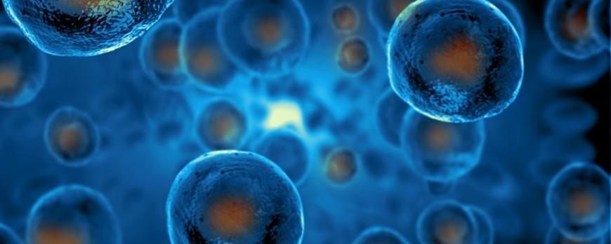 Лечение диабета: ученые превращают стволовые клетки в инсулин-продуцирующие